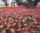 花博--春之花頌:IMG_4825.JPG