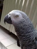 鳥:調整大小20081023127.jpg