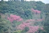 竹子湖:DSC_0099_調整大小_調整大小.JPG