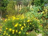 菜花園:調整大小103_1611.JPG