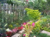 菜花園:調整大小103_1629.JPG