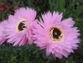 2011菜花園:IMG_6872_調整大小.JPG