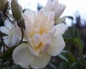 菜花園:調整大小102_9533.JPG