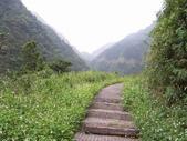 九份-金瓜石-貂山古道:調整大小照片 127.jpg