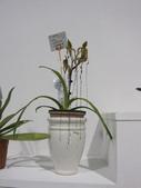 2011台北國際蘭展:IMG_6334_調整大小.JPG