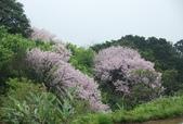 100之櫻花:DSC_0228.JPG