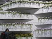 2011台北國際蘭展:IMG_6050_調整大小.JPG