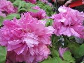 花博--春之花頌:IMG_7252_調整大小.JPG