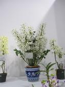 2011台北國際蘭展:IMG_6389_調整大小.JPG