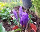 菜花園:調整大小102_9485.JPG