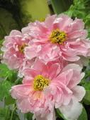花博--春之花頌:IMG_7285_調整大小.JPG
