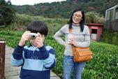 竹子湖:DSC_0126_調整大小_調整大小.JPG