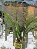 2011台北國際蘭展:IMG_6092_調整大小.JPG