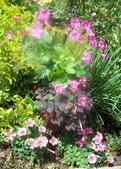 菜花園:調整大小103_1609.JPG