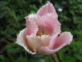 99-----菜花園:IMG_4228_調整大小