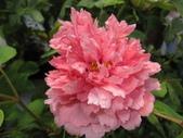花博--春之花頌:IMG_7262_調整大小.JPG