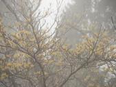太平山翠峰湖山毛櫸步道:調整大小DSC_1754.JPG