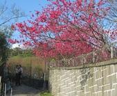 101年春櫻:IMG_3691.JPG