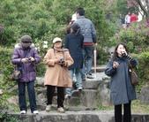 100之櫻花:DSC_0335.JPG