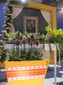 2011台北國際蘭展:IMG_6110_調整大小.JPG
