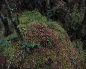 太平山翠峰湖:調整大小DSC_0456.JPG