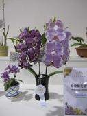 2011台北國際蘭展:IMG_6408_調整大小.JPG