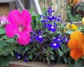 菜花園:調整大小102_9527.JPG