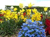 花園:IMG_8207
