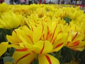 花博--春之花頌:IMG_4795.JPG