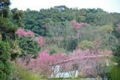 竹子湖:DSC_0100_調整大小_調整大小.JPG