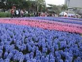 花博--春之花頌:IMG_4732.JPG