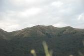 竹子湖:DSC_0155_調整大小_調整大小.JPG