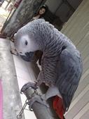 鳥:調整大小20081023129.jpg