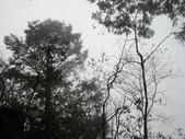 太平山&見晴古道:調整大小DSC_0847.JPG