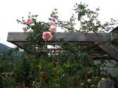 99---玫瑰:IMG_7394_調整大小.JPG