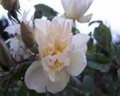 菜花園:調整大小102_9532.JPG