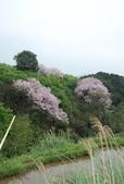 100之櫻花:DSC_0248.JPG