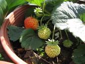 99-----菜花園:IMG_3139_調整大小