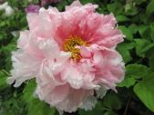 花博--春之花頌:IMG_7280_調整大小.JPG