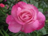 99---玫瑰:IMG_5494日出_調整大小
