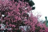 100之櫻花:DSC_0344.JPG