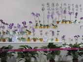 2011台北國際蘭展:IMG_6214_調整大小.JPG