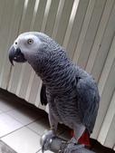 鳥:調整大小20081023128.jpg