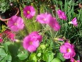 菜花園:調整大小103_1608.JPG