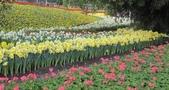 花博--春之花頌:IMG_4712.JPG