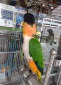 鳥:調整大小20081029141.jpg