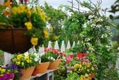 2011菜花園:DSC_0006.JPG