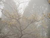 太平山翠峰湖山毛櫸步道:調整大小DSC_1753.JPG