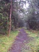 太平山翠峰湖山毛櫸步道:調整大小100_0828.JPG