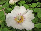 花博--春之花頌:IMG_7272_調整大小.JPG